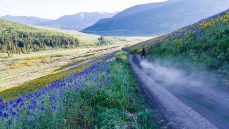 Bunte Blumen an einer Schotterstraße durch das Gunnison Valley bei Crested Butte