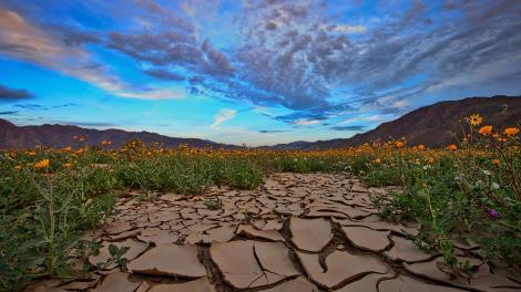 Sonnenaufgang über den blühenden Wildblumen im südkalifornischen Anza-Borrego Desert State Park
