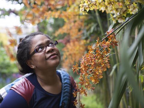 Besucher bewundern Orchideen im Botanischen Garten von Chicago