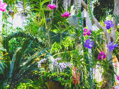 Orchideen im Nicholas Observatory