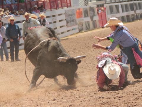 Rodeo bei den Cheyenne Frontier Days