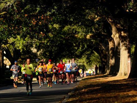 Läufer unter dem Blätterdach einer Eichenallee beim Louisiana Marathon