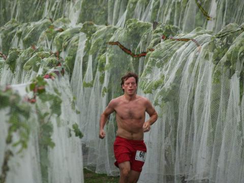 Läufer inmitten von Weinreben beim Harvest Stompede
