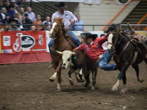Stierringkampf beim Black Hills Stock Show and Rodeo