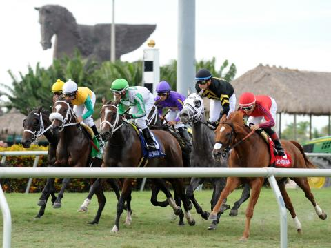 Ein Pferderennen beim Pegasus World Cup Invitational im Gulfstream Park in Hallandale Beach