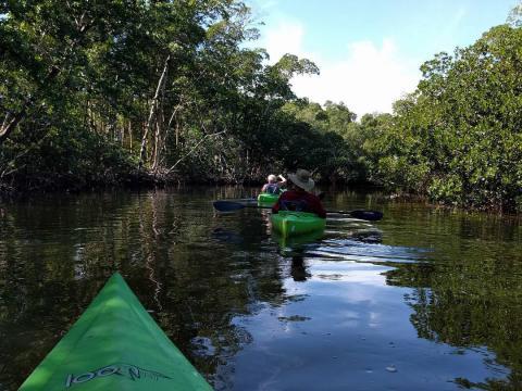 """Kajakfahrer im J.N. """"Ding"""" Darling National Wildlife Refuge auf Sanibel Island, Florida"""