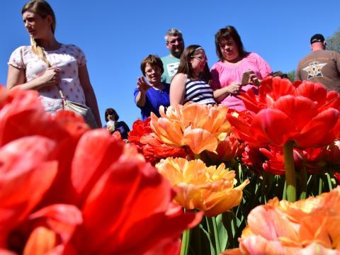 Besucher beim Albany Tulip Festival